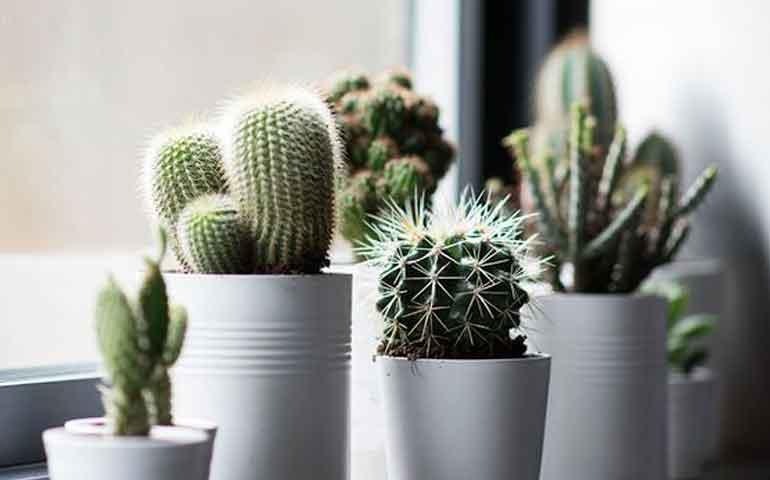 Plantas negativas que no debes tener en tu hogar seg n el - Feng shui hogar ...