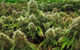 rechaza-nuevo-mexico-legalizacion-recreativa-de-mariguana