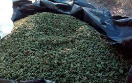 aseguran-predio-donde-procesaban-8-toneladas-de-mariguana