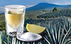 avalan-el-dia-nacional-del-tequila-sera-el-tercer-domingo-de-marzo