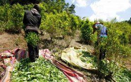 estados-unidos-regana-a-colombia-por-aumento-record-de-cultivo-de-coca