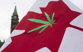 onu-critica-a-canada-por-legalizacion-de-mariguana
